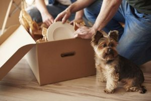 pets on moving day