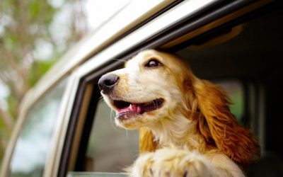Moving With Pets Is Now Easy In Brisbane